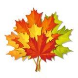 Mazzo dei fogli di autunno Immagine Stock