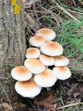 Mazzo dei funghi con il tronco dell'olmo Fotografia Stock Libera da Diritti