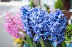 mazzo dei giacinti al fiorista Fotografia Stock