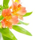 Mazzo dei gigli arancio freschi isolati su bianco Fotografie Stock