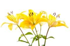 Mazzo dei gigli gialli fotografie stock