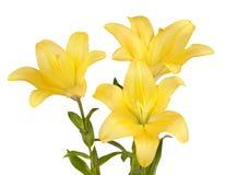 Mazzo dei gigli gialli Fotografia Stock Libera da Diritti