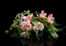 Mazzo dei gigli rosa sul nero Fotografia Stock