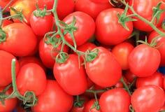 Mazzo dei pomodori Fotografie Stock
