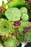 Mazzo dei succulenti Fotografia Stock Libera da Diritti