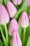 Mazzo dei tulipani Fotografia Stock Libera da Diritti