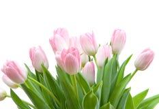 Mazzo dei tulipani Immagine Stock