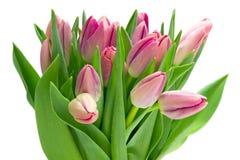 Mazzo dei tulipani Fotografia Stock