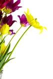 Mazzo dei tulipani Immagini Stock Libere da Diritti