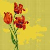 Mazzo dei tulipani illustrazione di stock