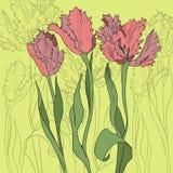 Mazzo dei tulipani illustrazione vettoriale