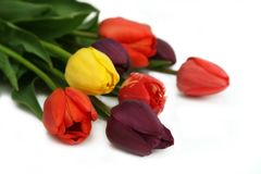 Mazzo dei tulipani Immagine Stock Libera da Diritti