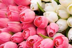Mazzo dei tulipani Fotografie Stock Libere da Diritti