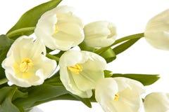 Mazzo dei tulipani bianchi Immagini Stock Libere da Diritti