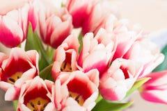 Mazzo dei tulipani dentellare Immagine Stock