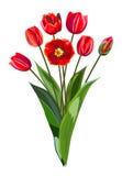 Mazzo dei tulipani rossi Fotografia Stock