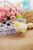 Mazzo dei tulipani e del pollo Fotografia Stock