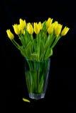 Mazzo dei tulipani gialli Fotografia Stock