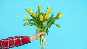 Mazzo dei tulipani gialli in una mano femminile su un fondo blu stock footage