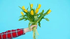 Mazzo dei tulipani gialli in una mano femminile su un fondo blu archivi video