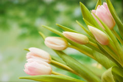 Mazzo dei tulipani rosa Fotografie Stock Libere da Diritti