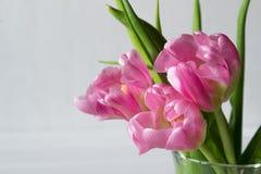 Mazzo dei tulipani rosa freschi su fondo bianco fotografia stock