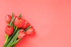 Mazzo dei tulipani rossi su fondo di carta rosso Fotografie Stock