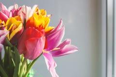 Mazzo dei tulipani sul davanzale della finestra vicino alla finestra Immagine Stock