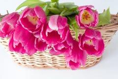 Tulipani in un canestro di legno Fotografie Stock