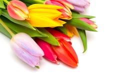 Mazzo dei tulipani variopinti su bianco Immagini Stock