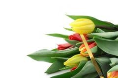 Mazzo dei tulipani variopinti su bianco Fotografia Stock