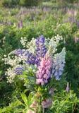 Mazzo dei Wildflowers Fotografia Stock Libera da Diritti
