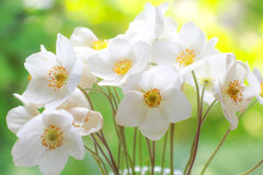 Mazzo dei wildflowers bianchi Fiori freschi Occasioni speciali Cartoline d'auguri, celebrazione, anniversario Fotografia Stock