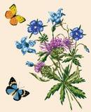 Mazzo dei wildflowers e delle farfalle Fotografia Stock