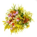 Mazzo dei wildflowers su un fondo bianco Fotografia Stock