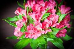Mazzo del alstromeria rosa Fotografia Stock