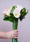 Mazzo del Amaryllis Fotografia Stock Libera da Diritti