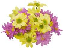 Mazzo del crisantemo Fotografia Stock
