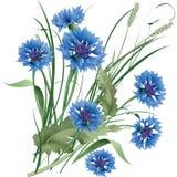 Mazzo del mazzo di wildflowers blu dei fiordalisi con le foglie verdi Fotografia Stock Libera da Diritti