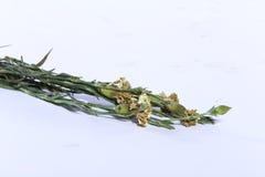 Mazzo del fiore artificiale variopinto, fondo bianco fotografie stock libere da diritti