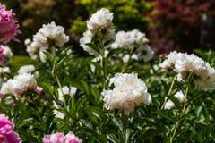 Mazzo del fiore bianco Fotografia Stock