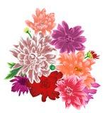 Mazzo del fiore del crisantemo isolato Immagine Stock