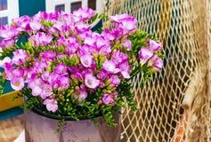 Mazzo del fiore del fondo rosa di alstroemeria Fotografia Stock Libera da Diritti