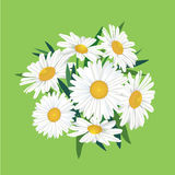 Mazzo del fiore del prato Fotografie Stock Libere da Diritti