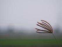 Mazzo del fiore dell'erba Fotografia Stock