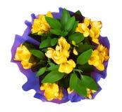 Mazzo del fiore giallo di fresia Fotografia Stock Libera da Diritti