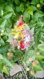 Mazzo del fiore selvaggio immagine stock libera da diritti