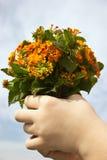 Mazzo del fiore selvaggio Fotografia Stock Libera da Diritti