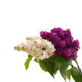 Mazzo del fiore variopinto della molla Fotografia Stock