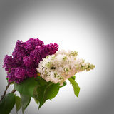 Mazzo del fiore variopinto della molla Immagine Stock